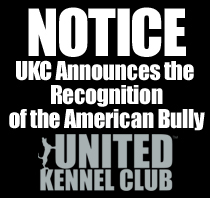 Recognition of American Bully
